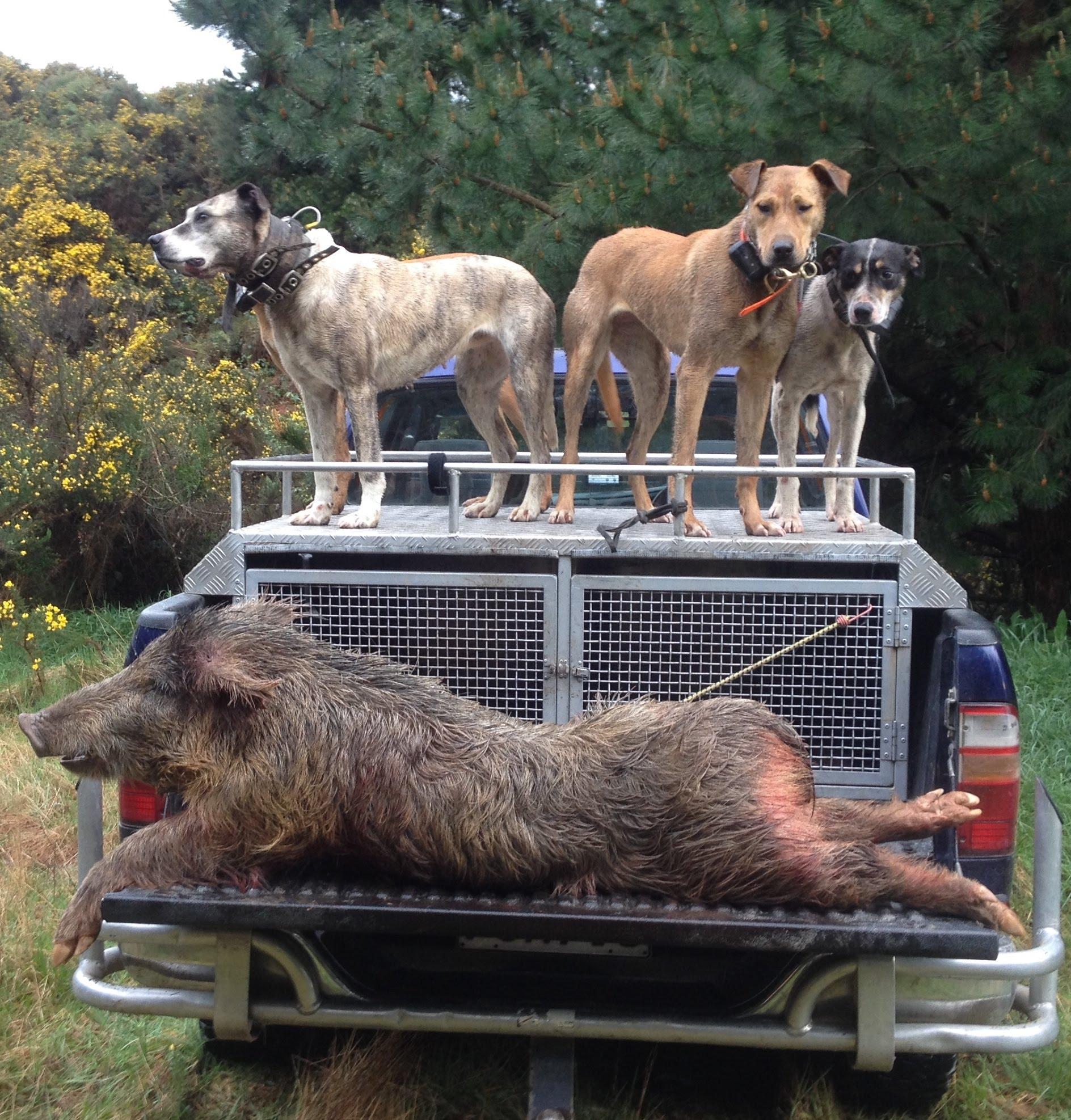 Best Pig Hunting Dog Breeds Nz